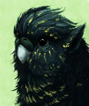 parrot griffin by TinToad