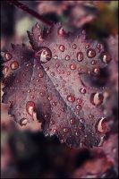 Mulberry Drops 3 by GrotesqueDarling13