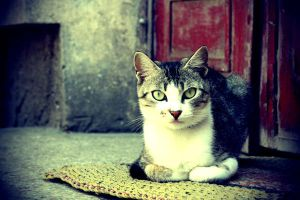 Cat Lomography by aty-cosco