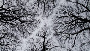 Clandeboye Canopy2... by dhc72