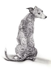 The Whippet by zimian69
