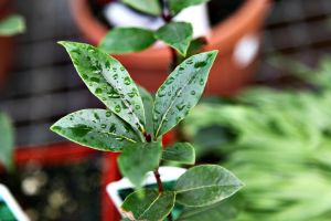 Bay Leaves by SchatzFoto