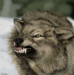 Tutorial - Wolf Painting by jezebel