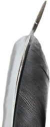 Black and White Feather PNG by Thy-Darkest-Hour