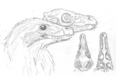 Dromaeosaur Sketch by povorot