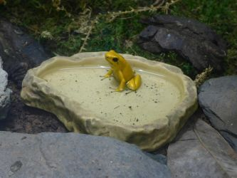 Yellow Frog by astateofconfusion