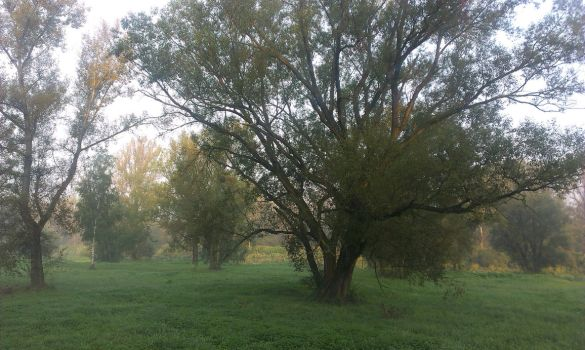 Just a tree by Askhran