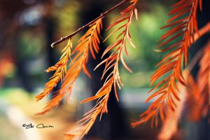 Autumn in fire by LikeWind