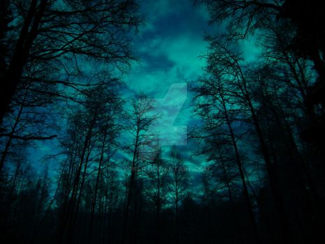 Moonlight Forest by Toni-R
