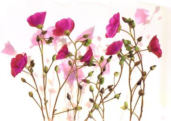 Fuschia Floral No. 3 by kparks