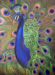 Peacock Prismacolor 2 by HouseofChabrier