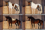 Adopt horse auction 3 [CLOSED] by Yanmi