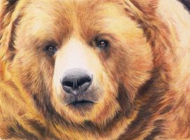 Bear - realistic drawing by Katchina-Q2