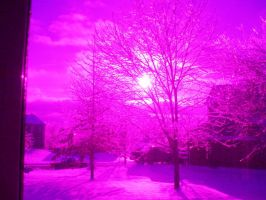 Purple Trees and Sky by Sunlandictwin