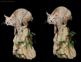 Boulder Cat by WeirdCityTaxidermy