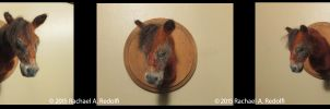 Needle Felt Standardbred Horse Bust by RRedolfi