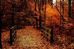 Colors of Fall by Fuhnora