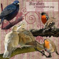Birdies by libidules