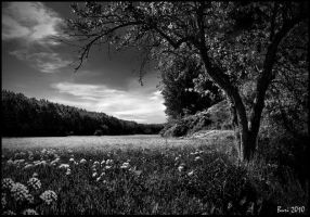 Landscape in black and white by Buri65