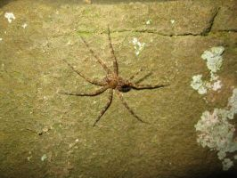 Cave Spider by Fireborn46