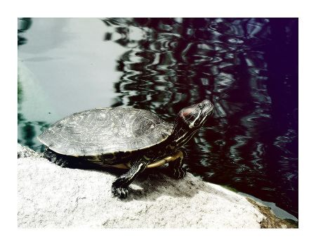 Turtle Pond by hell0z0mbie