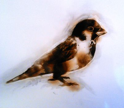 Fire Drawing- Sparrow by oO-sam-Oo