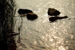 Stones at the water by LoveForDetails