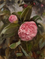 Japanese Camellia by AaronMiller