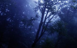 Fog in the forest II by VesnaRa-14