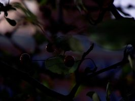 Fruit for leaves 4 by zeiriza