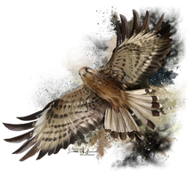 Falcon in flight by Kajenna