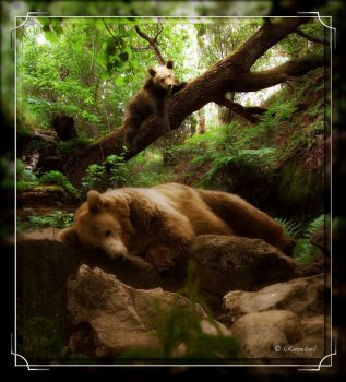 Bear Necessities by Ravenclaw1