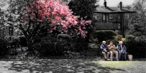 Under the Blossom HDR by Tafkag