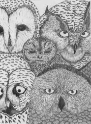 Owls by bullet-in-my-mouth