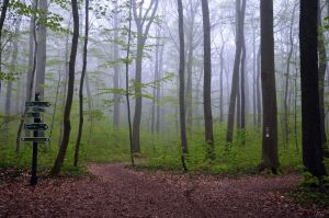 Allein im Wald by only1second