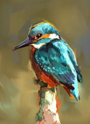 Kingfisher 2 by Fievy