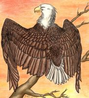 Eagle by A2wildFox