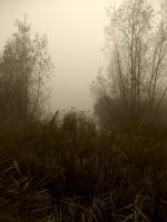 Darkness in Nature Project 37 by RkChimaira