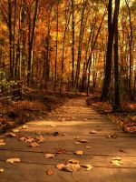 Forest in the Autumn II by SEnigmaticX