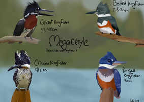 Megacerile kingfishers by ringette-and-riding