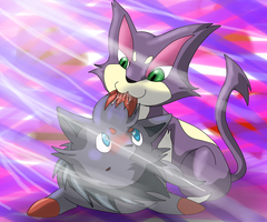 Purrloin and Zorua