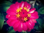 Summer Flower 2012 - 13 by Ingnition