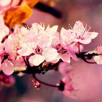 Because spring... by xTive