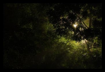 UFO in the Woods by lastfuture