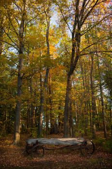 The Riverwood Conservancy by waudrey