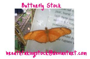 Butterfly Stock by breathtakingstock