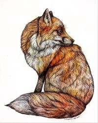 Red Fox  by jessburnett