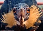 Angry Bird by Oddersnude