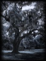 Dark Cypress by raVen-MacKay