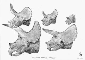 Triceratops horridus ontogeny by Xezansaur